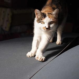 今日の我が家の猫