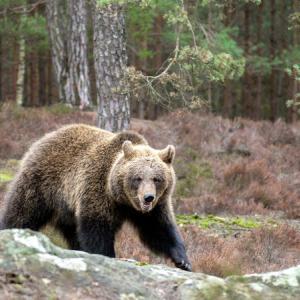 熊や危険動物対策