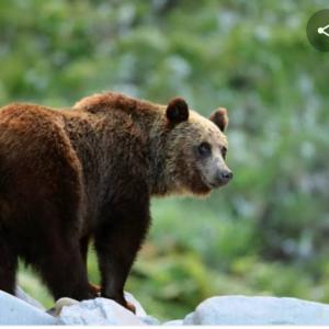 熊対策グッズⅡ