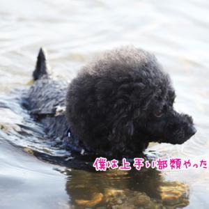 夏だ!琵琶湖だ!BBQだー!-湖水浴それぞれの楽しみ方-