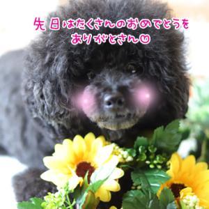 愛を込めて花束を(*´∀`*)