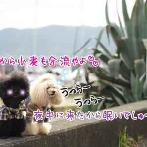 2020年秋旅行☆東西アベック(*`艸´)