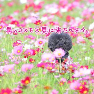 ピンクの世界で逢いましょう♪