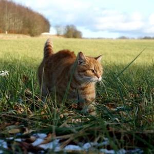 かわゆす猫ちゃん発見