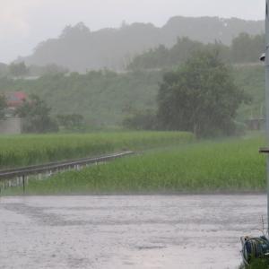 四国徳島いま急にすごい雨が降っています。