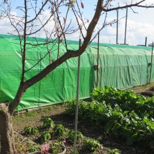 夏場はスイカ、冬野菜は虫の付きやすいキャベツ、白菜、育てるハウス