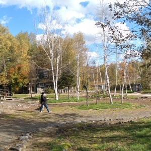富良野麓郷の森