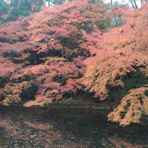 美しき日本の私・・清水寺