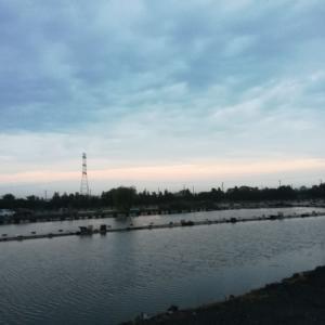 19.8.25 第4日曜日の筑波流源湖