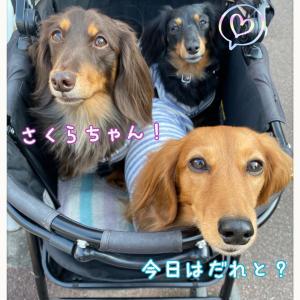 ★駒沢公園へ〜!★