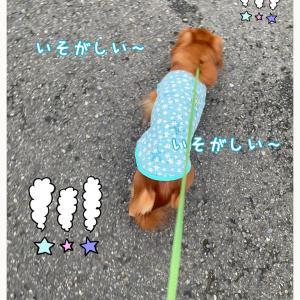 ★雨降る前に〜★
