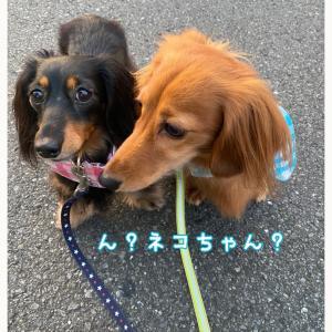 ★朝から仲良し散歩〜★