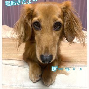 ★ソバージュBOY★