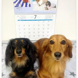 ★今月の犬川柳カレンダー★