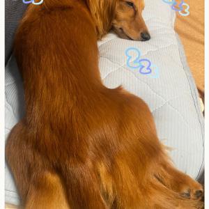 ★ラム専用枕♡★