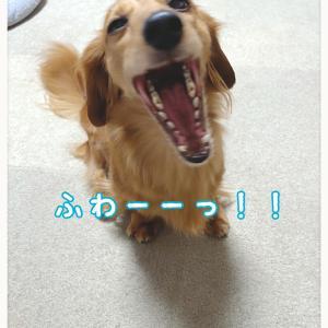 ★あくび〜★