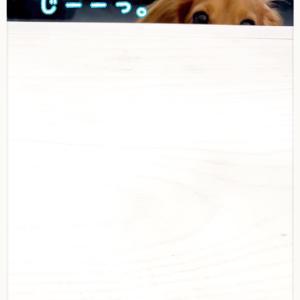 ★熱い視線〜★