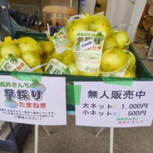 おいしい新玉ねぎの季節!淡路島で有名な玉ねぎ屋3選