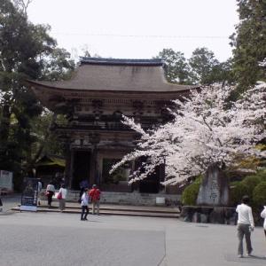 湖国の🌸たび~三井寺~