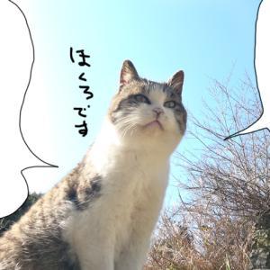 新457話【 ほくろちゃんの計算によると 】〜田代島ねこ便り〜2020!