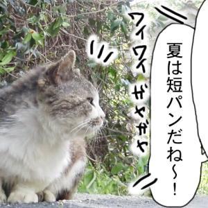 【 涼しい格好? 】(旧セレクト)〜田代島ねこ便り〜2020!
