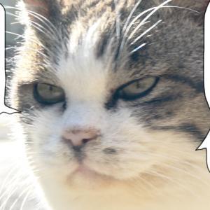 新511話 【 ほくろちゃんの猫の家計画 】〜田代島ねこ便り〜2020!