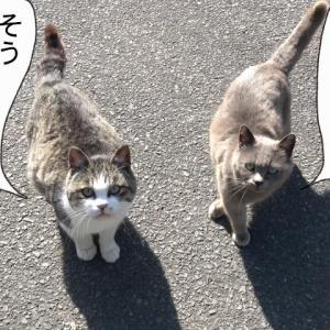 新525話 【 ほくろちゃんの野望 】〜田代島ねこ便り〜2020!