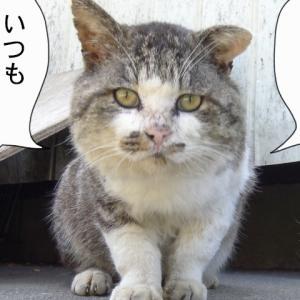 【 大切な?お知らせです!】〜田代島ねこ便り〜2020!