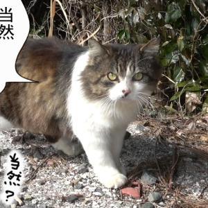 新539話【 思いつかなかった件 】〜田代島ねこ便り〜2020!