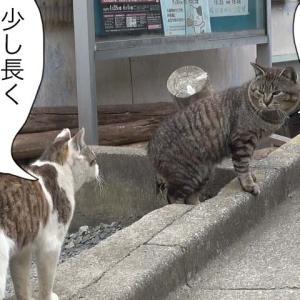 第613話 【 牡蠣のお話 】〜田代島ねこ便り〜2021!