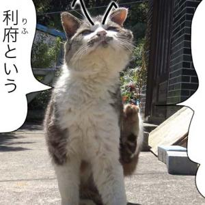 第615話 【 利府の梨 】〜田代島ねこ便り〜2021!