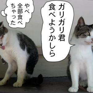 新380話【 ガリガリ君に代わりに 】〜田代島ねこ便り〜2019!