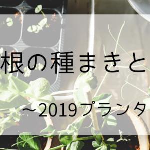 ミニ大根の種まきと間引き~2019プランター栽培8~