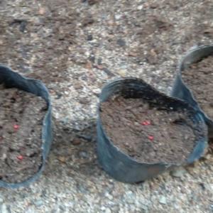 令和元年9月23日(月)家庭菜園 種蒔き