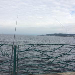 海辺釣り公園 タチウオ
