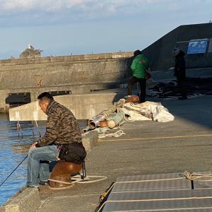 何時もの釣れない田子漁港に。