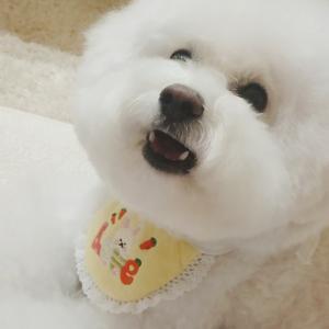 ブランおシャンプーDay♡