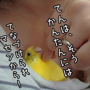 小鳥の中毒性は