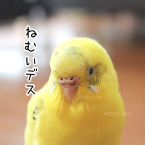 小鳥の表情がクルクル変わるのを見るのが好きだ