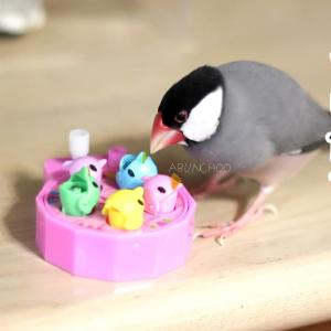 小さい鳥に?