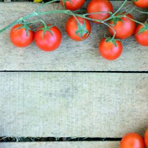 2020年度のトマト栽培 今年目標は50個