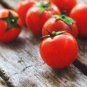 トマトが収穫できるまでの積算温度とは