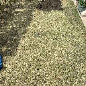 4月には芝生も張り替えた