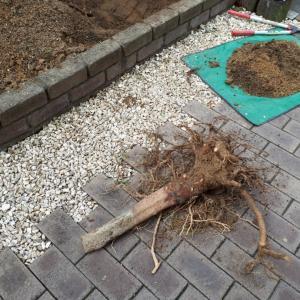 花壇をリセットする 4(トラウマからの解放)