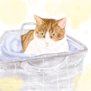 久しぶりの猫お絵かき、完成