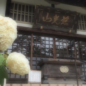 金乗院の紫陽花は