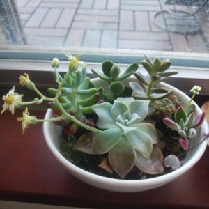 花が咲きました!&植物あれこれ