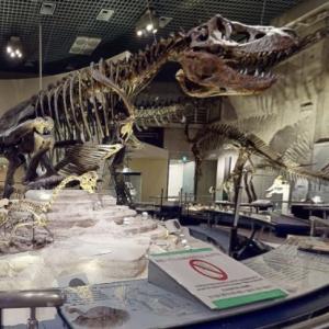 VR国立科学博物館