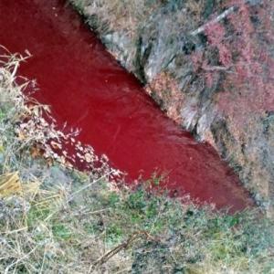 【話題】殺処分された 4万7000匹分の豚の血で赤く染まってしまった韓国の川に中国人「菌を繁殖させてないか?」[11/15]
