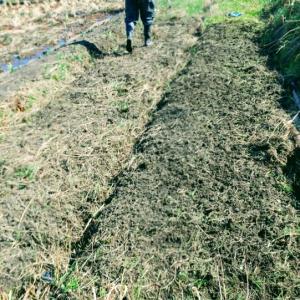 苗床整備はじめました。